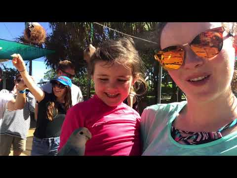 OUR TIME AT SEA LIFE PARK IN HAWAII