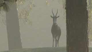 Only In Africa: Wildlife on the Golf Course