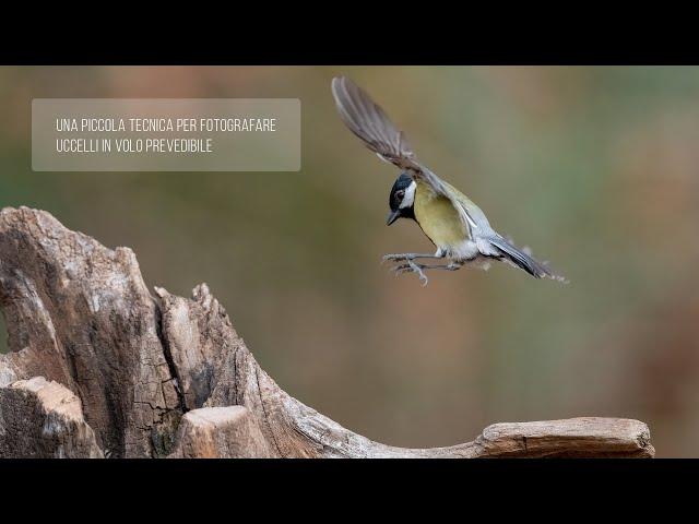 Una piccola tecnica per fotografare uccelli in volo prevedibile