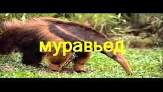 видео Животные экваториального леса