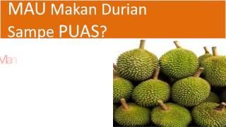 081327119234(T-Sel) Jual Bibit Durian Montong, Bawor Merah, Petruk