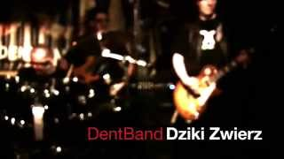 DentBand - Dziki Zwierz