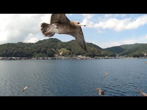 Ine - Kyoto by sea 伊根灣 海之京都