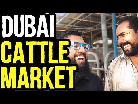 Dubai Cattle & Meat Market Tour | دبی مویشی مارکیٹ کا دورہ | Azad Chaiwala Show