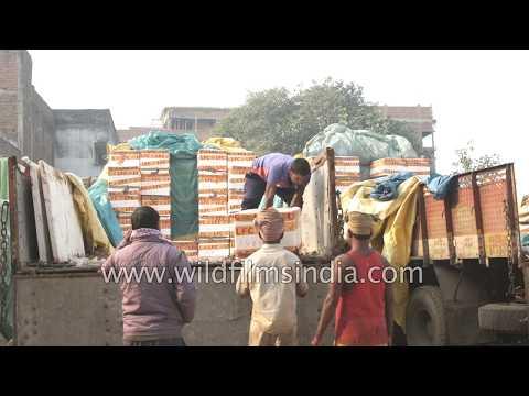 Unloading fresh fish - Hajipur's fish market
