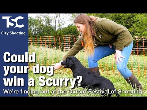 How To Enter Your Dog In A Scurry