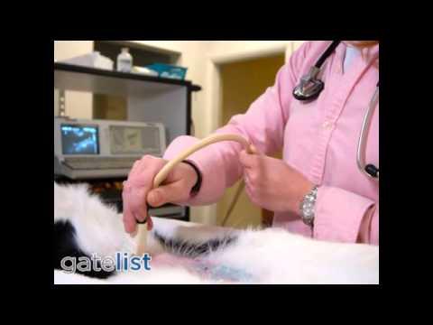 Saratoga Veterinary Hospital - Emergency Care - Saratoga CA 95070