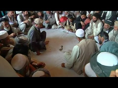 Quail fighting is a big money sport in Afghanistan