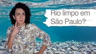 Rio limpo em São Paulo - Pílulas Paulistanas