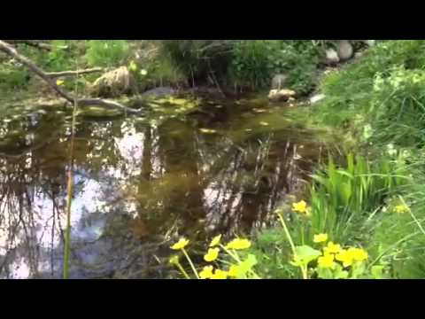Build Your Own Wildlife Pond