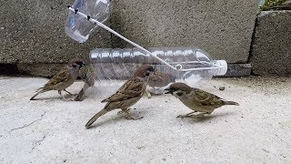 Water bottle bird trap thumbnail