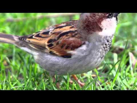 Evolution of Birds (Biology)