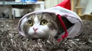 Жизнь кота Мару