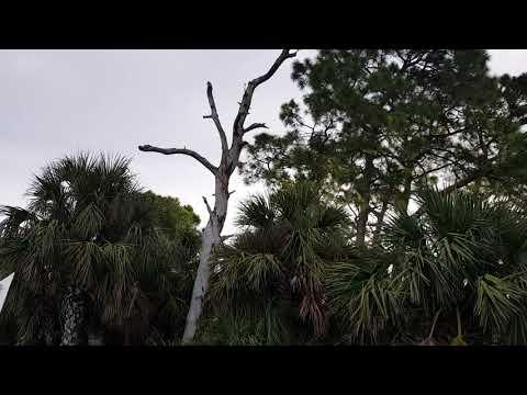 Gulf of Mexico Key Vista Nature Park New Port Richey Florida