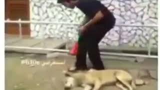 Как напугать собаку до смерти     ОЧЕНЬ СМЕШНО!