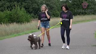 Dog Walking and Boarding Service in Oklahoma