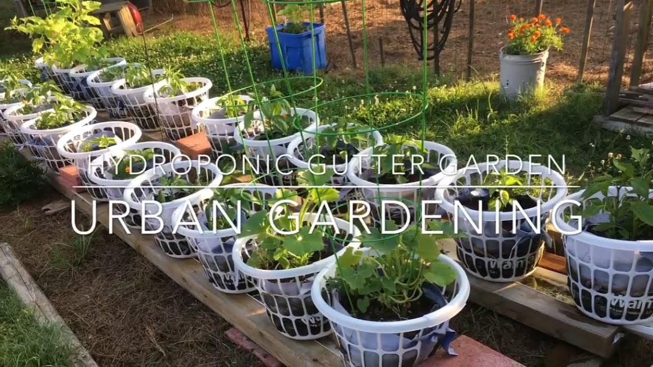 Hydroponic Wicking Gutter Garden Urban Gardening Youtube