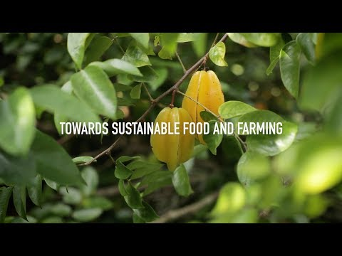 Organic 3.0 - Sustainable Food and Farming 🥦 🍅 🍎