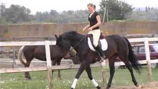 Все О Домашних Животных: Украинская Порода Лошадей