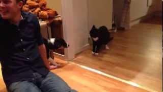 Bliss träffar katten Sixten