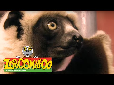 Zoboomafoo 135 - Who's in the Egg? (Full Episode)