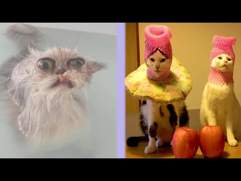 BEST CAT MEMES COMPILATION OF 2021 PART 39 (FUNNY CATS)