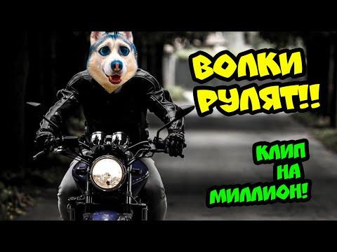 Хаски Бандит - ВОЛКИ РУЛЯТ! (Official Music Video) КЛИП НА МИЛЛИОН ПОДПИСЧИКОВ!!