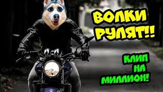 Хаски Бандит - ВОЛКИ РУЛЯТ (music video) КЛИП НА МИЛЛИОН ПОДПИСЧИКОВ
