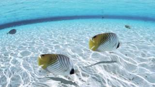 """Download Relaxing Music - """"Warm Sea"""" Mp3 and Videos"""