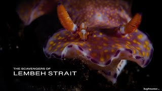 LEMBEH STRAIT 2019 | The weird and wonderful Macro behaviour continued