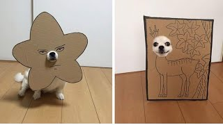 Japanese Women Creates Hilarious Cardboard Cutouts With Her Dog...