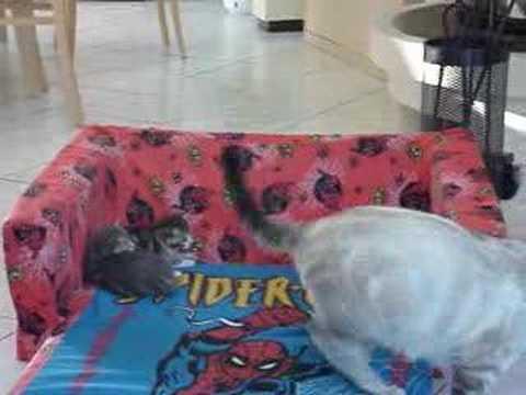 Jouant avec la chatte