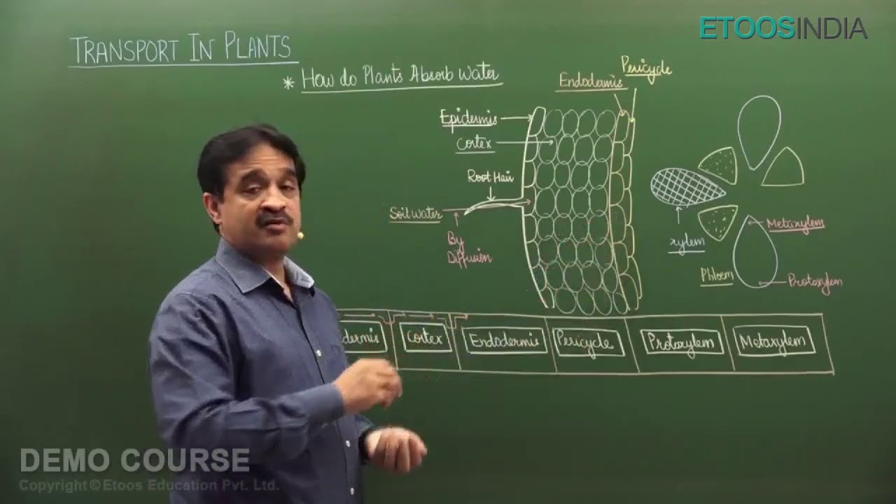 Transport in Plants by ha sir