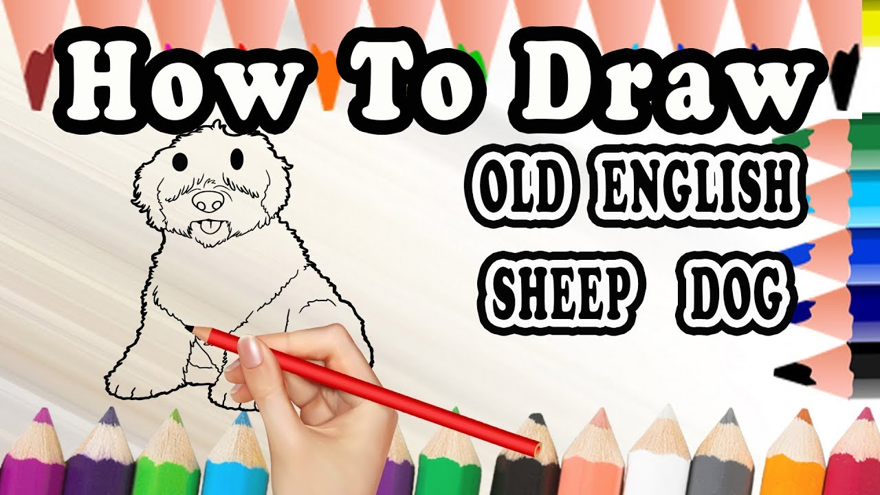 How To Draw A Old English Sheepdog Dog Draw Easy For Kids Youtube