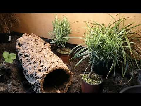 Natrix natrix terrarium