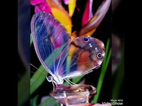 8 Spesies Kupu Tercantik Di Alam Semesta