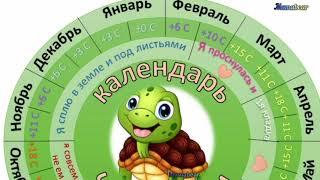 Календарь Черепахи. Что делают черепахи в разное время года?