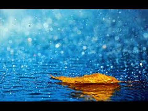 Rain Sounds to Relax and Sleep  - 30 minutes