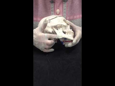 Male Female Skull Comparison