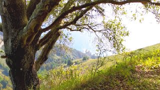 "Peaceful Beautiful Instrumental Music, Soft Relaxing Music ""The Beautiful Big Sur"" by Tim Janis"
