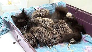 Посмотрите, Что Бывает, Когда Животные Воспитывают Чужих Детёнышей