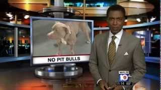 Pit Bulls banned but easy to buy in Miami-Dade