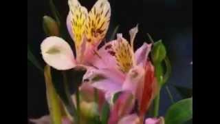 интернет магазин цветов mir-cvetov.kz(, 2013-06-04T06:23:41.000Z)