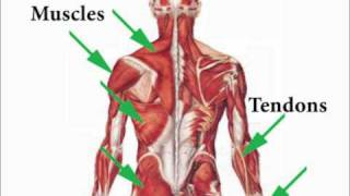 Sports Injuries Self-Treatment Nature Of Injuries 1