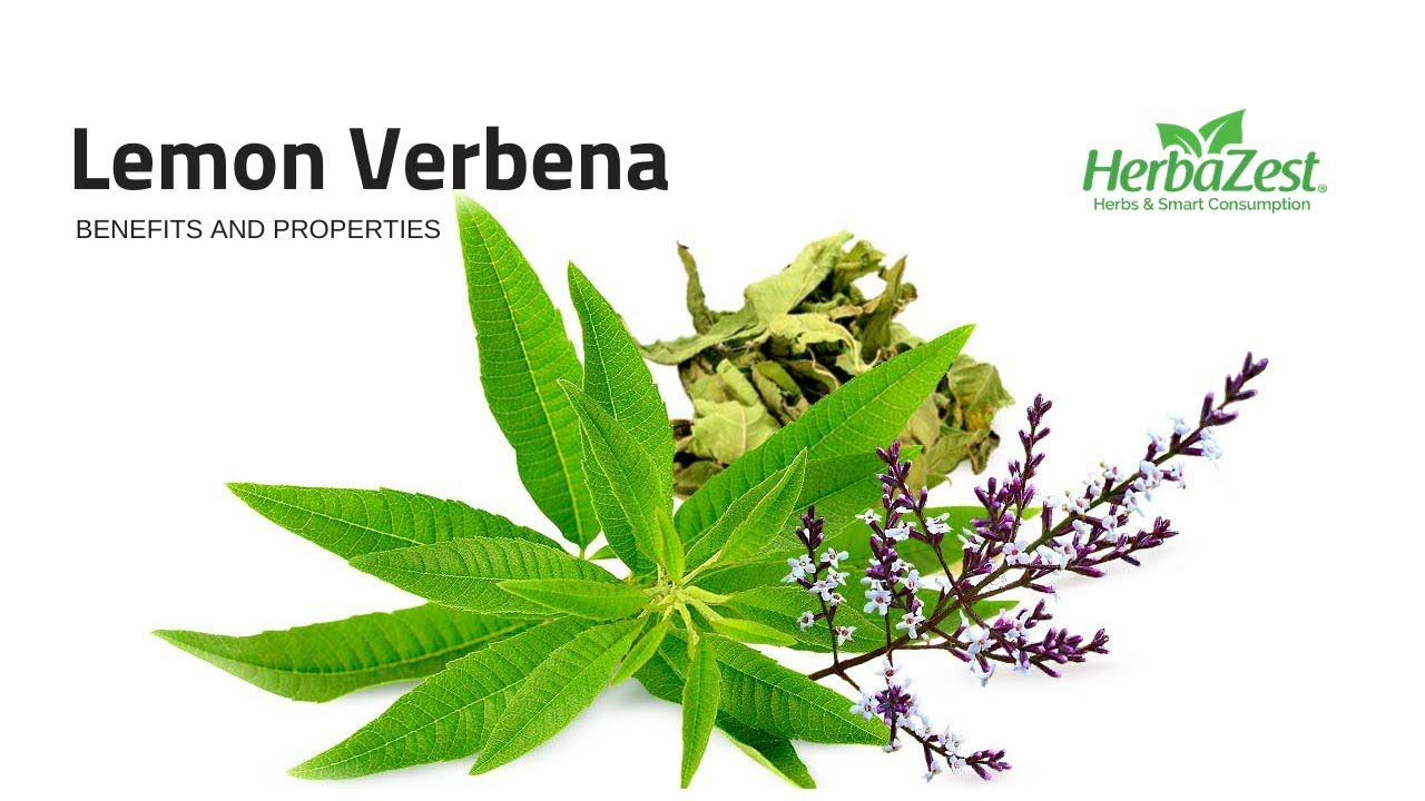 Lemon Verbena Herbazest