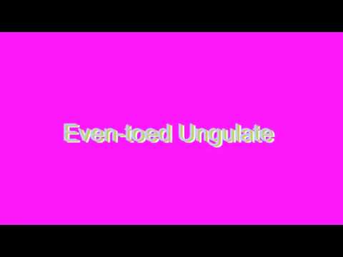 How to Pronounce Even-toed Ungulate