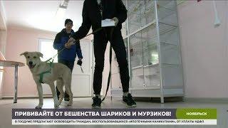 На Ямале стартовала прививочная кампания для животных