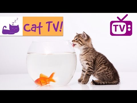 Cat TV - 30 Min Fish Swimming in Tank Combined with Calming Music. Engaging TV for Cats. Ep 4