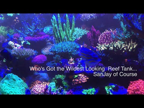 Who's got the best bioluminescing reef tank ....  Sanjay of course - coral bioluminescence