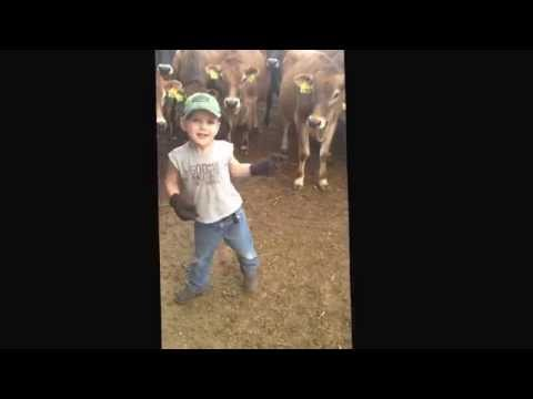 Jersey boy, Jersey cows, country music & 60 seconds of entertainment! #farm365
